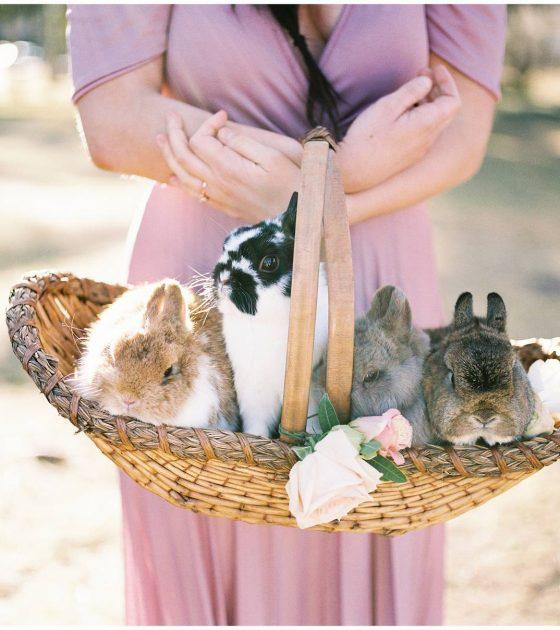 Easter Bunny Bridals