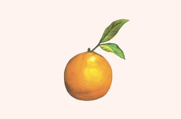 Orange Photographie