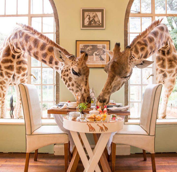 5 Safari Honeymoon Destinations for the Adventurous at Heart