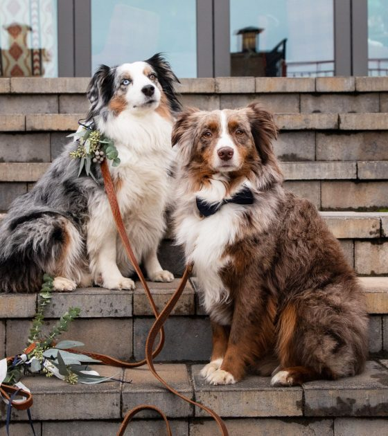 Adorable Ways to Include Your Dog in Your Wedding